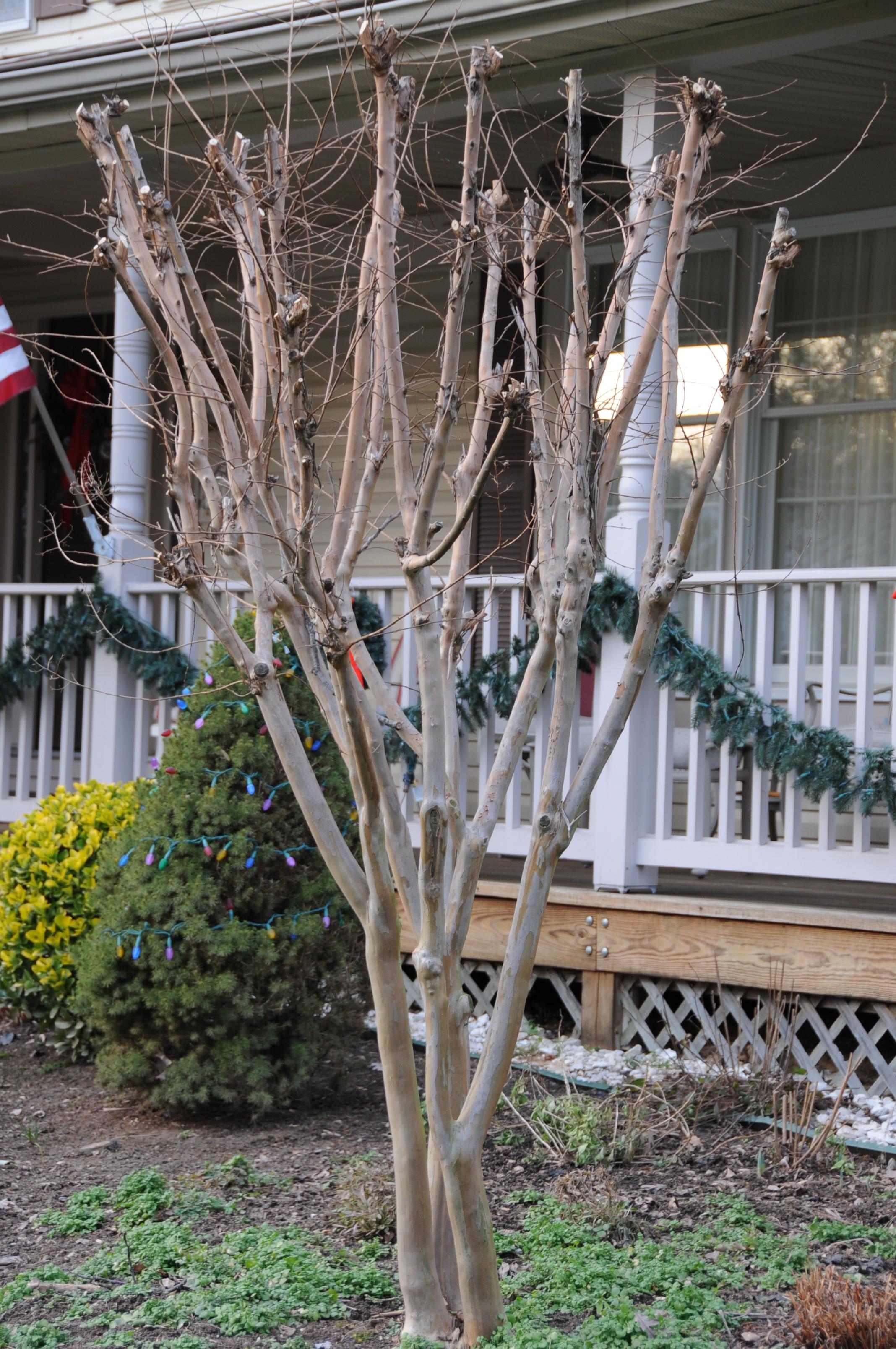 White Led Christmas Tree