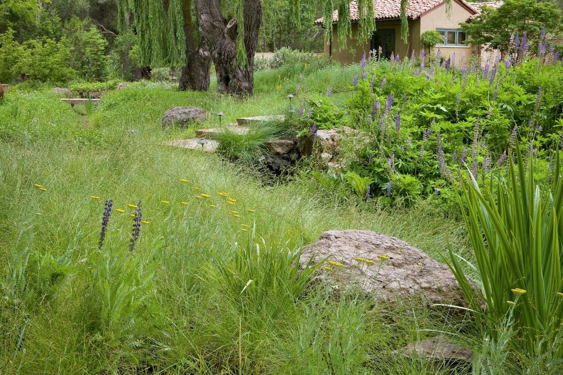 The new american meadow garden black walnut dispatch a greenlee meadow workwithnaturefo