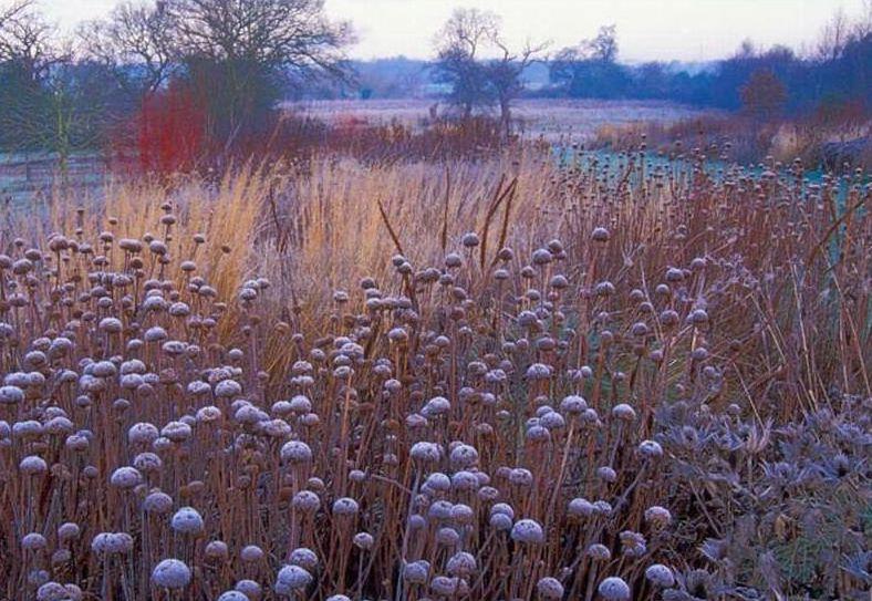Piet Oudolf Winter Garden