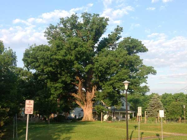 oaktree2)